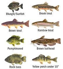 Catskill Region Fish Advisories
