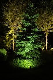 landscape lighting trees. Perfect Trees Pine And Deciduous Tree Landscape Lighting And Landscape Lighting Trees 2