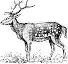 Зимний олень раскраска