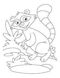 Small Picture Raccoon a washer dog coloring pages Download Free Raccoon a