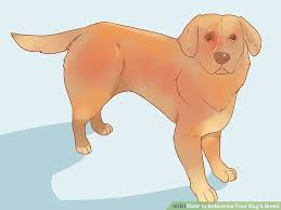 How To Determine Your Dogs Breed 13 Steps With Pictures