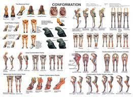 Horse Conformation Chart Horse Anatomy Horses Horse Tips