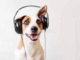 Cão Nos Fones De Ouvido Que Escuta A Música Imagem de Stock - Imagem de cão,  música: 99718037