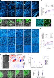 Extracellular Matrix Anisotropy Is Determined By Tfap2c