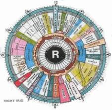 42 Best I See You Iridology Images Iridology Chart