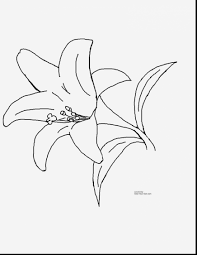 Small Picture Tulip Flower Coloring Pages Coloring Pages