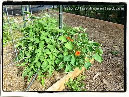 Companion Planting Farm Homestead