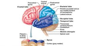nervous system and sch motor system interact