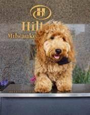 Hilton Milwaukee City Center's Beloved Canine Concierge, Millie ...