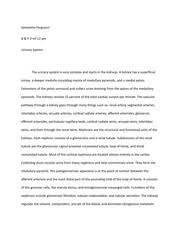 urinary system essay rough draft samantha ferguson a p mf  2 pages urinary system essay final