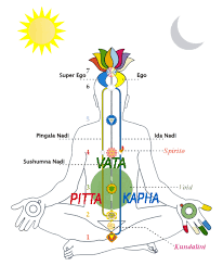Vata Foods Chart Vata Pitta Kapha Doshas Vedic Institute Of Canada