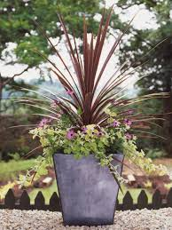 Small Picture Best Thriller Plants for Containers HGTV