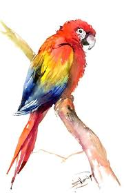 scarlet macaw original watercolor painting bright tropical bird art 22 in x