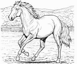 Horse Coloring Page Coloring Page Book For Kids