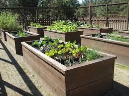 gardening with raised garden beds