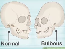 Small Animal Skull Identification Chart How To Identify Human Bones 15 Steps With Pictures Wikihow