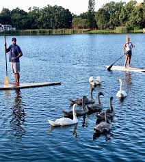 Residents care for the swans of Lake Copeland | The Community Paper