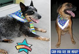 scrapbusters reflective dog bandana sew4home