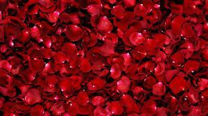1920x1080 Red Rose, flowers desktop PC ...