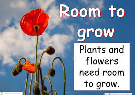 Ppt Flowers Ppt What Do Plants And Flowers Need To Grow Powerpoint