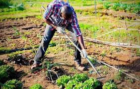 VEGETABLES THAT GROW WELL IN CLAY SOIL – Slick Garden