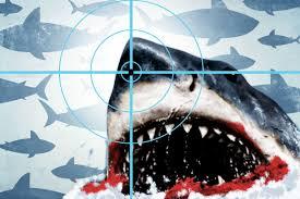 The Shark Movie Matrix The Ringer