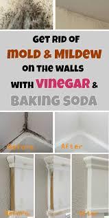 Get rid of mold & mildew on the walls with vinegar and baking soda -  myCleaningSolutions.com | Baking soda, Vinegar and Soda
