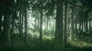 TLOU2 Beautiful Forest HD Desktop ...