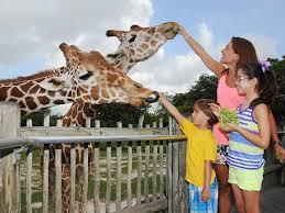 zoo. Modren Zoo Zoo Miami For O
