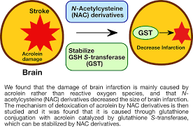 Nine teams are divided into east (5 teams) and west (4 teams) divisions, with three teams in the west division playing in the conference for the first time. Protective Effects Of Brain Infarction By N Acetylcysteine Derivatives Stroke