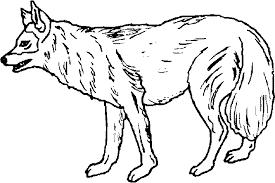 Disegni Di Animali Da Colorare E Stampare