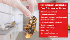 to prevent roaches from entering