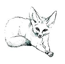 Arctic Fox Coloring Pages Related Post Animal Jam Arctic Fox