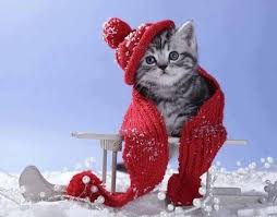 Image result for winter images and cats