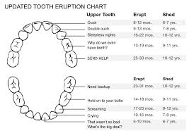 A Helpful Chart For Your Teething Baby The Other Mothers