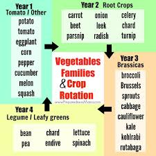 Vegetable Families And Crop Rotation Preparednessmama
