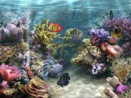 Fish Tank - HD Wallpapers