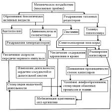 Влияние массажа на организм человека Ответная реакция органов и  Гуморальное вляние массажа на организм человека