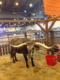 Livestock Show Animals Picture Of Rodeo Houston Or