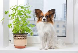 dogs deadly houseplants