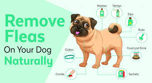 get rid of fleas on dogs