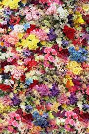 carpet of flowers mtg. carpet of flowers · mtg