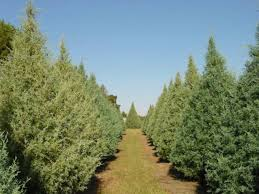The Home Depot  Local Farms To Nearby Lots The Life Of A Home Local Christmas Tree Lots