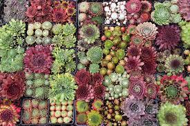Small Picture Garden Design Garden Design with Echeveria Painterus Brush
