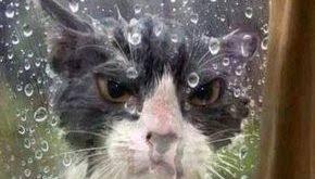 Regen Archives Ubere Tiere