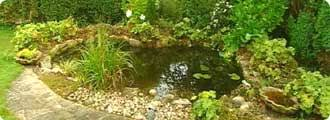 Small Picture BBC Gardening How to be a gardener Water garden Pond basics