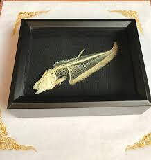 knifefish skeleton