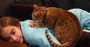 Hasil gambar untuk cat kneading