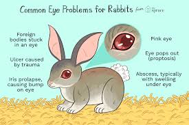 why do rabbits have eye issues