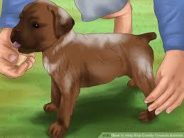 ways to help stop cruelty towards animals wikihow image titled help stop cruelty towards animals step 9